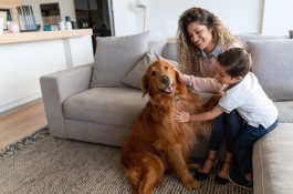 Pet safety at Texas Children's Hospital
