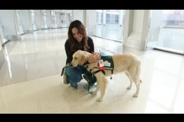 Embedded thumbnail for Texas Children's Therapy Dog Program