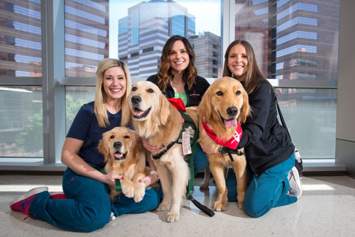 animal-assisted therapy | texas children's hospital