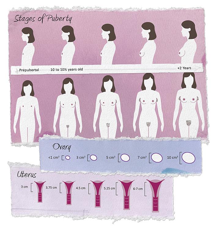 Breast development and menstruation